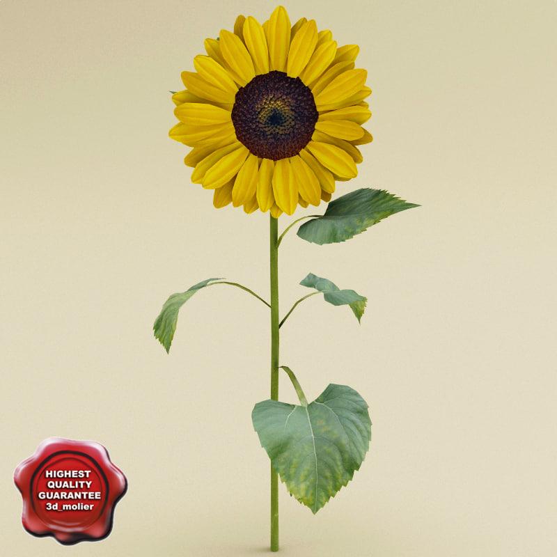 sunflower modelled c4d