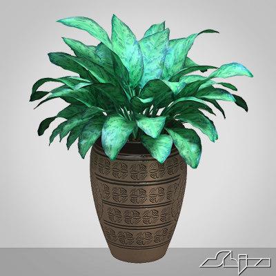 3d model of aglaonema houseplant