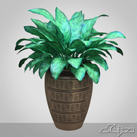 3d model of aglaonema houseplant