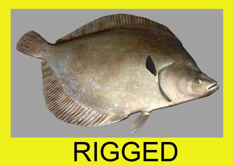 3d plaice flatfish