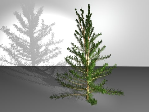c4d american larch tree