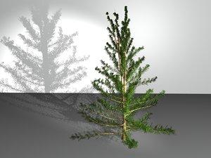 c4d american larch tree