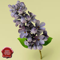 lilac flower 3d model