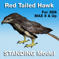 red tailed hawk standing 3d max