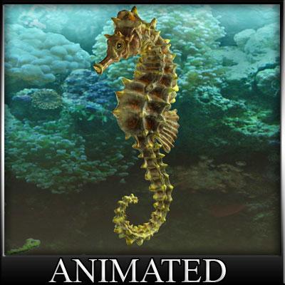 3d model sea horse seepferd