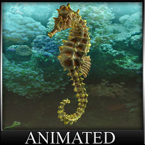 3d model sea horse seepferd