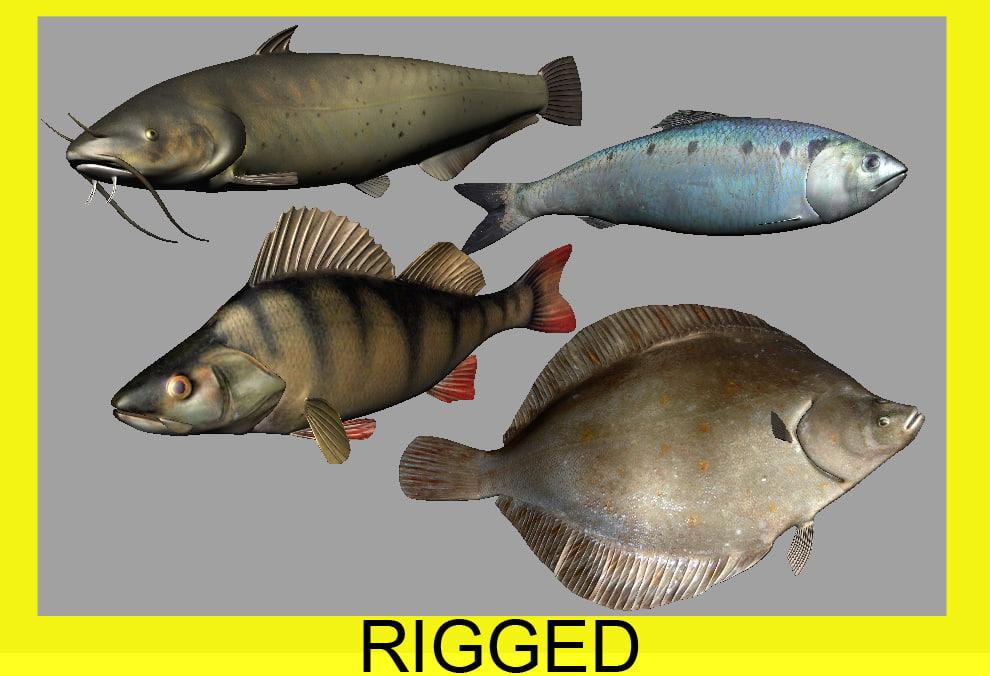 fishes herring catfish perch ma
