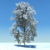 snowtree5