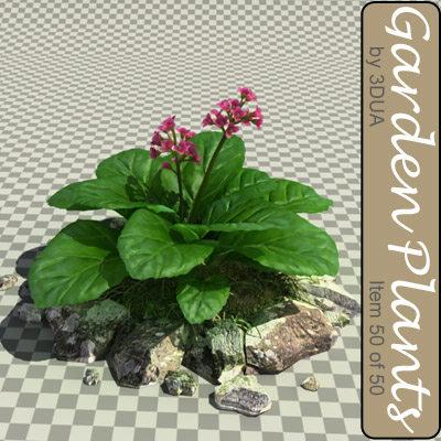 3ds max bergenia plants 050