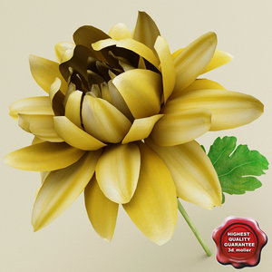 3d chrysanthemum modelled model