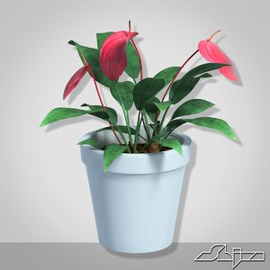 3d model anturium houseplant