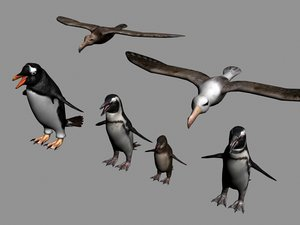 3d penguins antarctic