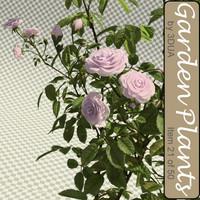 003_rose_bush