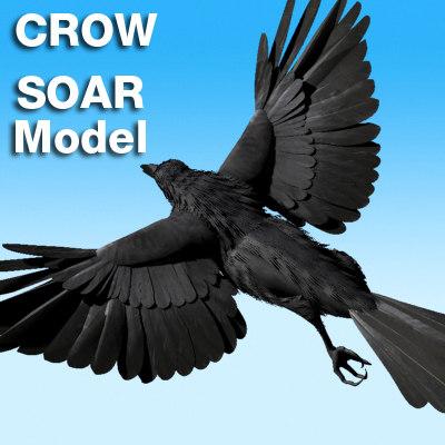 3d model crow soaring rigged v8