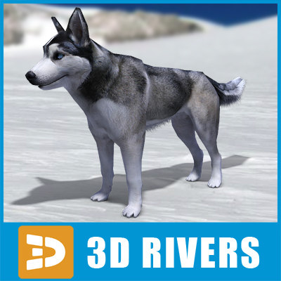 husky dogs 3ds