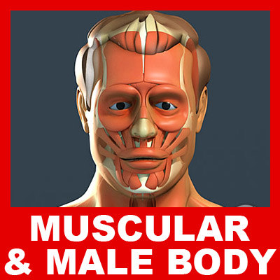 3d max medically human male body