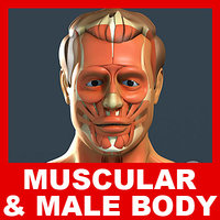 Male Body, Muscular System and Skeleton (No Textures).rar