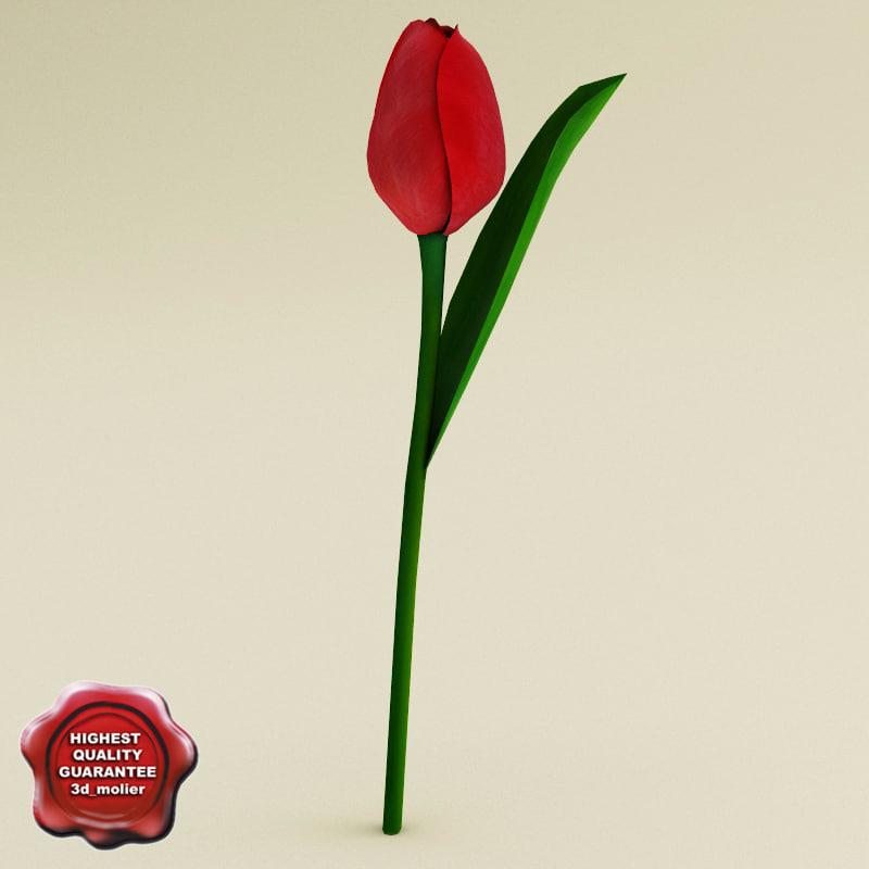 3d red tulip