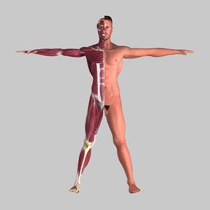 male human anatomy skeleton 3d model