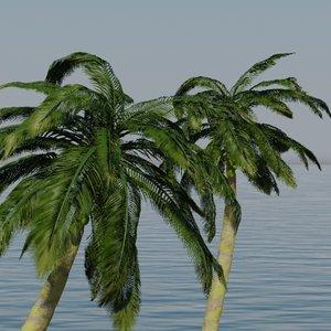 coconut palms tree 3d model