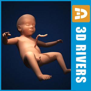 fetus embryo development 3d model