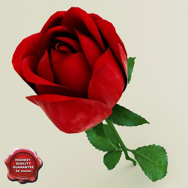 3d rose modelled model