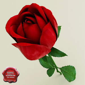 3d rose modelled model