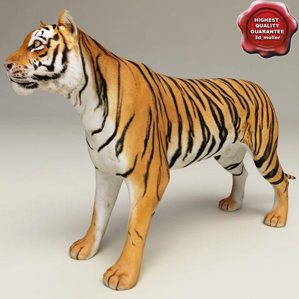 3d tiger modelled model