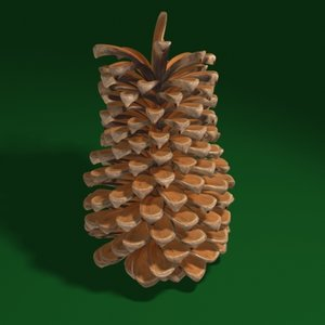 maya pine cone
