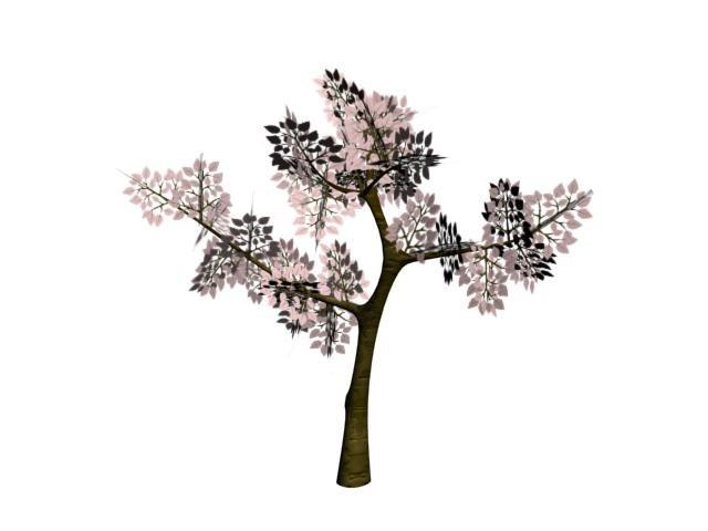 maya tree arbre cerisier
