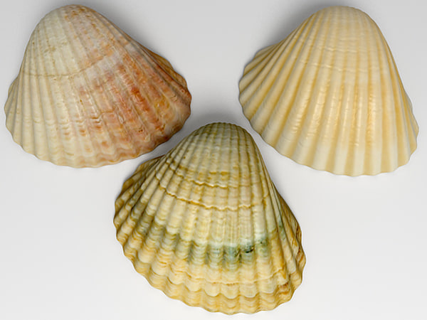 3d max ark cockle seashell