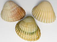 Ark Shell 2