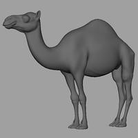 3d model of camel