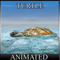 Water Turtle die Schildkroete