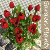 max tulip 021
