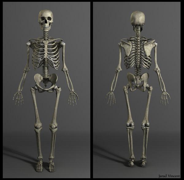 muscles skeleton 3d obj
