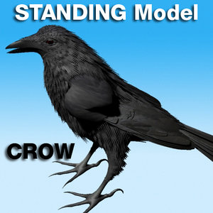 crow standing rigged v8 max