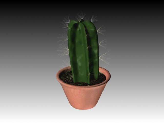 max desert cactus vase