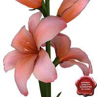 gladiolus modelled 3d obj