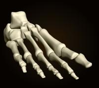 3ds foot bones