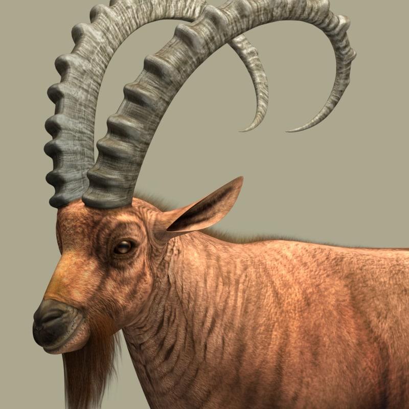 nubian ibex 3d model