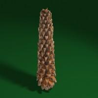 3d pine cone
