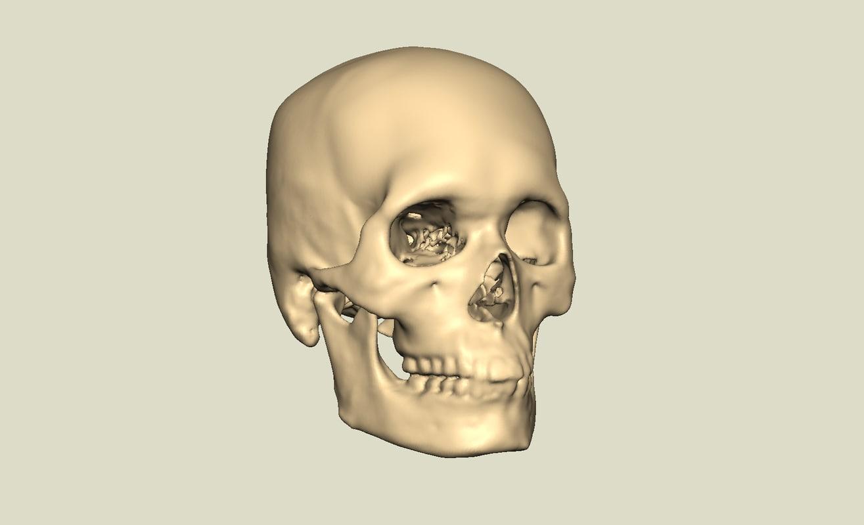 human skull 3d obj
