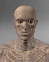 maya realistic man skeleton
