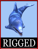 dolphin rigged 3d x