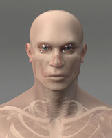 realistic man skeleton 3d ma