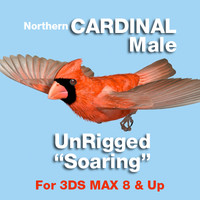 3ds max cardinal soaring position