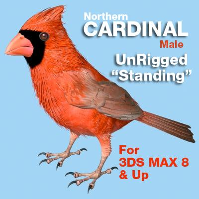 3d model bird cardinal standing wings