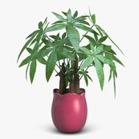 3d fratsiya houseplant
