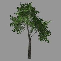 Tree model # 9